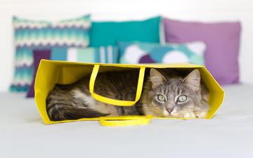 кот, мордочка, усы, кошка, взгляд, сумка, лежа
