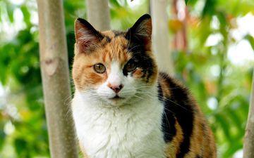 природа, мордочка, усы, кошка, взгляд, животное