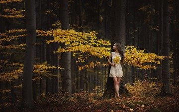 trees, forest, leaves, girl, mood, autumn