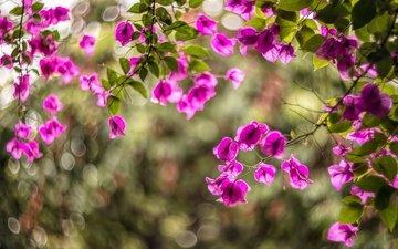свет, цветы, природа, цветение, фон, ветки, размытость, листочки, куст, боке