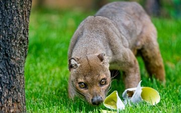 eyes, grass, nature, tree, muzzle, look, paper, trunk, nose, fossa, derevo, on the face, about the animal