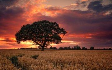 небо, дерево, закат, поле, англия, дербишир