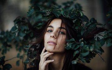 листья, девушка, взгляд, модель, венок, эшли, jesse herzog