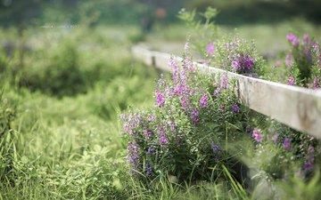 цветы, трава, природа, лето, забор, jane