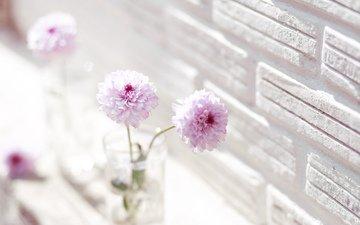 цветы, ваза, георгины