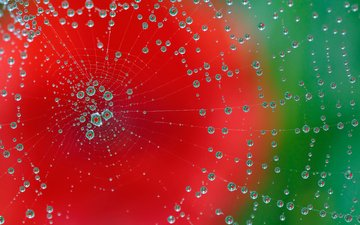 макро, фон, роса, капли, цвет, паутина