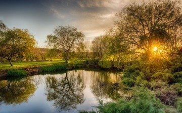 trees, river, nature, morning, dawn