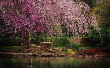 river, nature, tree, park, spring, bench, pond, sakura