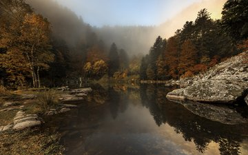 trees, river, nature, forest, fog, autumn, etienne ruff