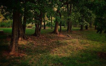 trees, nature, park