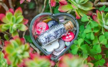 растения, клевер, сердце, банка, бутылочка, баночка, пуговицы, пуговки