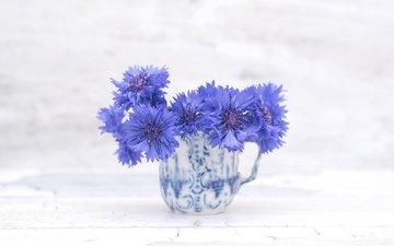 цветы, васильки
