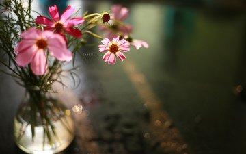 цветы, лепестки, букет, ваза, космея