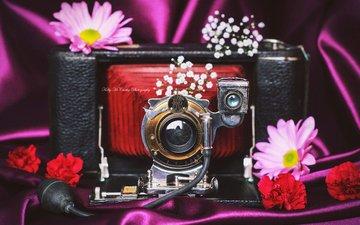 цветы, ретро, фотоаппарат, камера, okelly mccarthy
