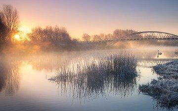 river, nature, landscape, morning, fog, bridge, bird, swan