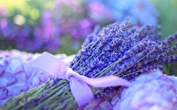 цветы, лаванда, букет, лента