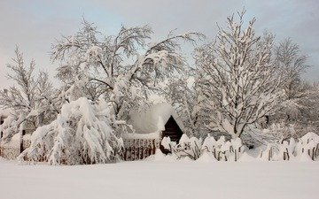деревья, снег, природа, зима, деревня, домик