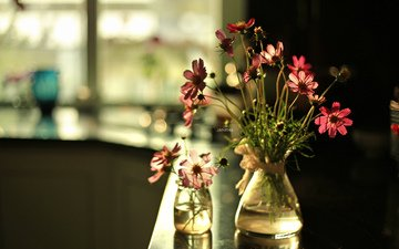 цветы, ваза, космея