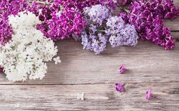 цветы, весна, сирень, деревянная поверхность
