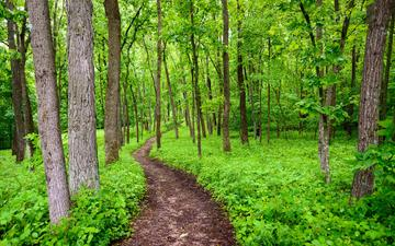 trees, nature, greens, plants, forest, trunks, path, iowa