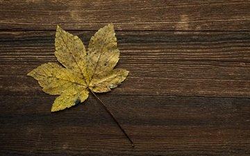 осень, лист, прожилки, деревянная поверхность