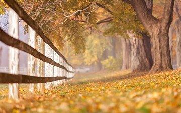 деревья, листья, ветки, стволы, осень, забор