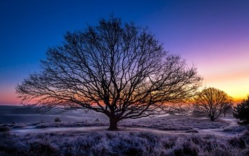 the sky, trees, sunset, winter, frost, netherlands, guelders, rheden