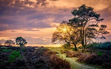 небо, облака, деревья, закат, поле, тропинка, нидерланды