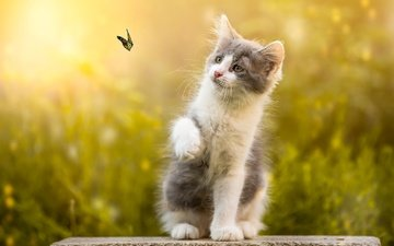 nature, butterfly, kitty, stone, animal, bokeh