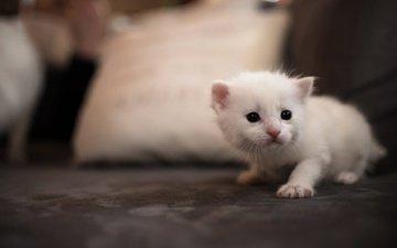 фон, кот, мордочка, кошка, котенок, белый, диван, подушка, глазки