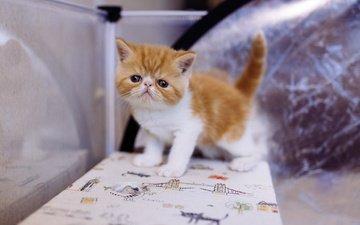 eyes, cat, muzzle, look, kitty, table, baby