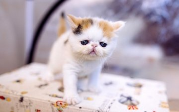 глаза, кот, мордочка, кошка, взгляд, котенок, стол, малыш