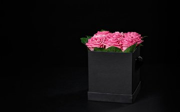 roses, black background
