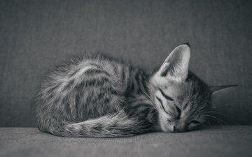 кот, мордочка, усы, кошка, чёрно-белое, сон, котенок, белый