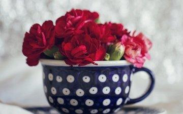 цветы, букет, чашка, гвоздики