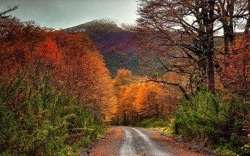 дорога, деревья, горы, природа, лес, пейзаж, осень, чили, кустарники
