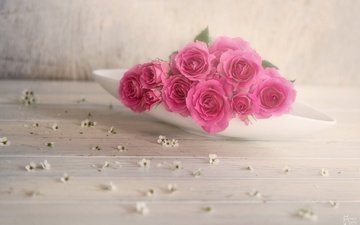 flowering, leaves, rose, petals, bud