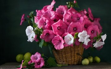 цветы, фрукты, яблоки, букет, корзинка, натюрморт, петунья
