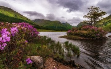 flowers, trees, lake, mountains, nature, rock, island, scotland