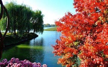 небо, цветы, деревья, озеро, осень