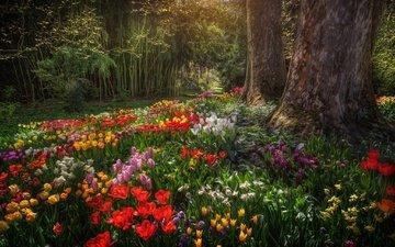 цветы, деревья, парк, тюльпаны, германия, нарциссы, баден-вюртемберг, остров майнау
