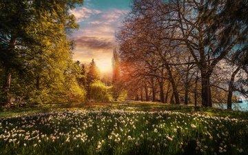 небо, цветы, облака, деревья, закат, парк, сад, германия, ирисы, баден-вюртемберг, боденское озеро, остров майнау