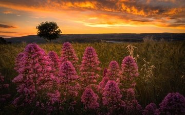 the sky, flowers, clouds, tree, plants, sunset, meadow, italy, sicily