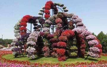 цветы, дизайн, парк, дубаи, оаэ, miracle garden