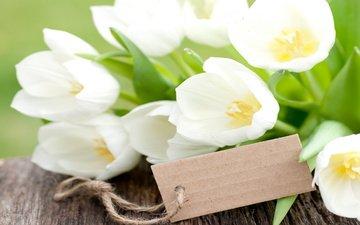 цветы, бутоны, доски, тюльпаны, белые, карточка