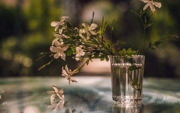 цветы, вода, листья, отражение, фон, лепестки, стакан, букетик, боке