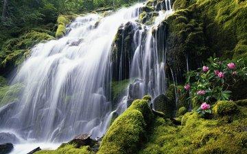 цветы, камни, водопад, поток, мох