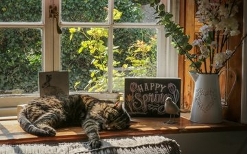 цветы, кот, кошка, лежит, окно, ваза, подоконник