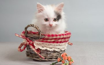 flowers, cat, muzzle, mustache, look, kitty, animal, basket