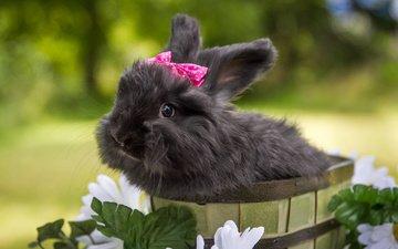 цветы, кролик, животное, бант, ведро